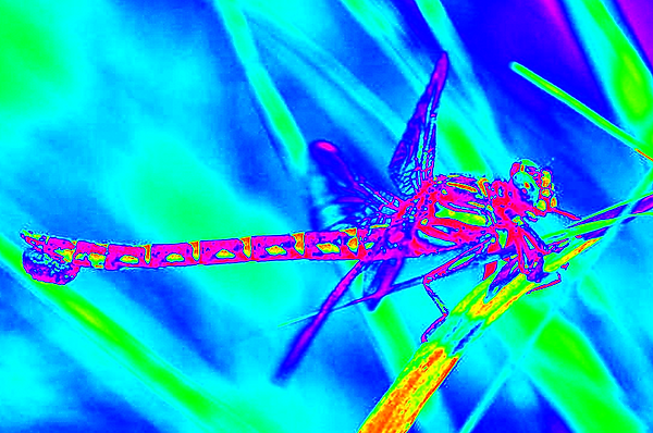 clubtail  __046.png