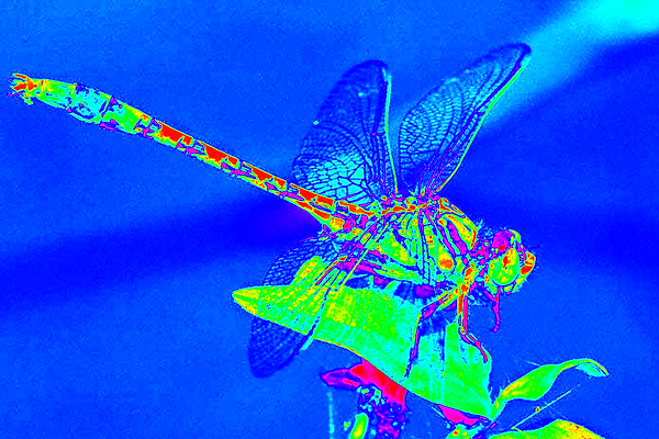 clubtail  __026.png