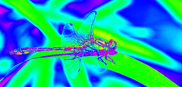 clubtail  __082.png