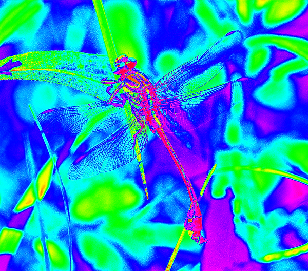 clubtail __008.png