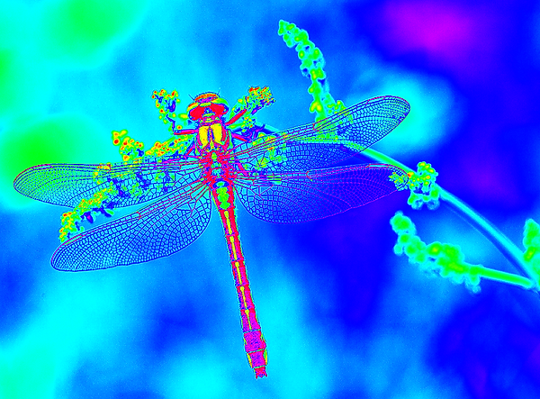 clubtail  __088.png