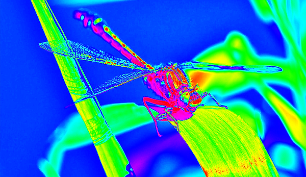 clubtail  __065.png