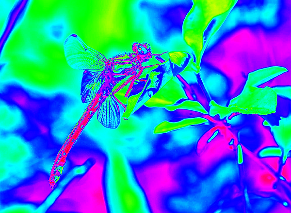 clubtail   __040.png