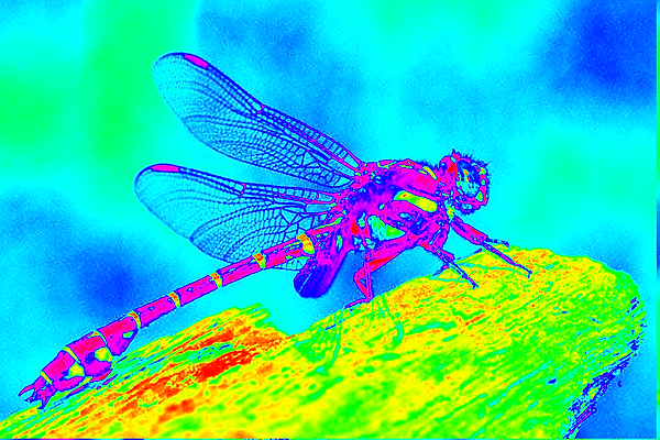 clubtail  __015.png