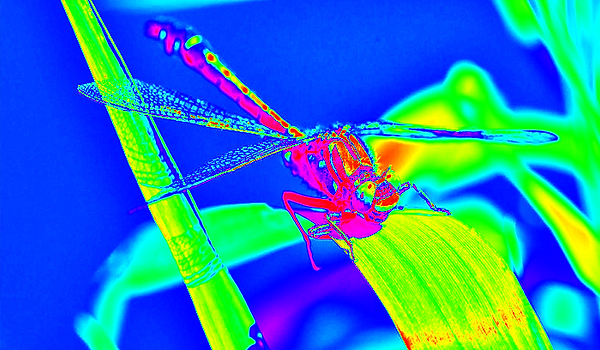 clubtail  __062.png