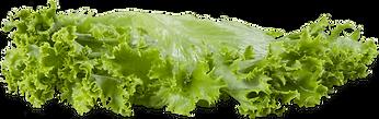 lettuce-slice-png-1.png