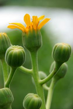 Perennial Plants | Garden Design