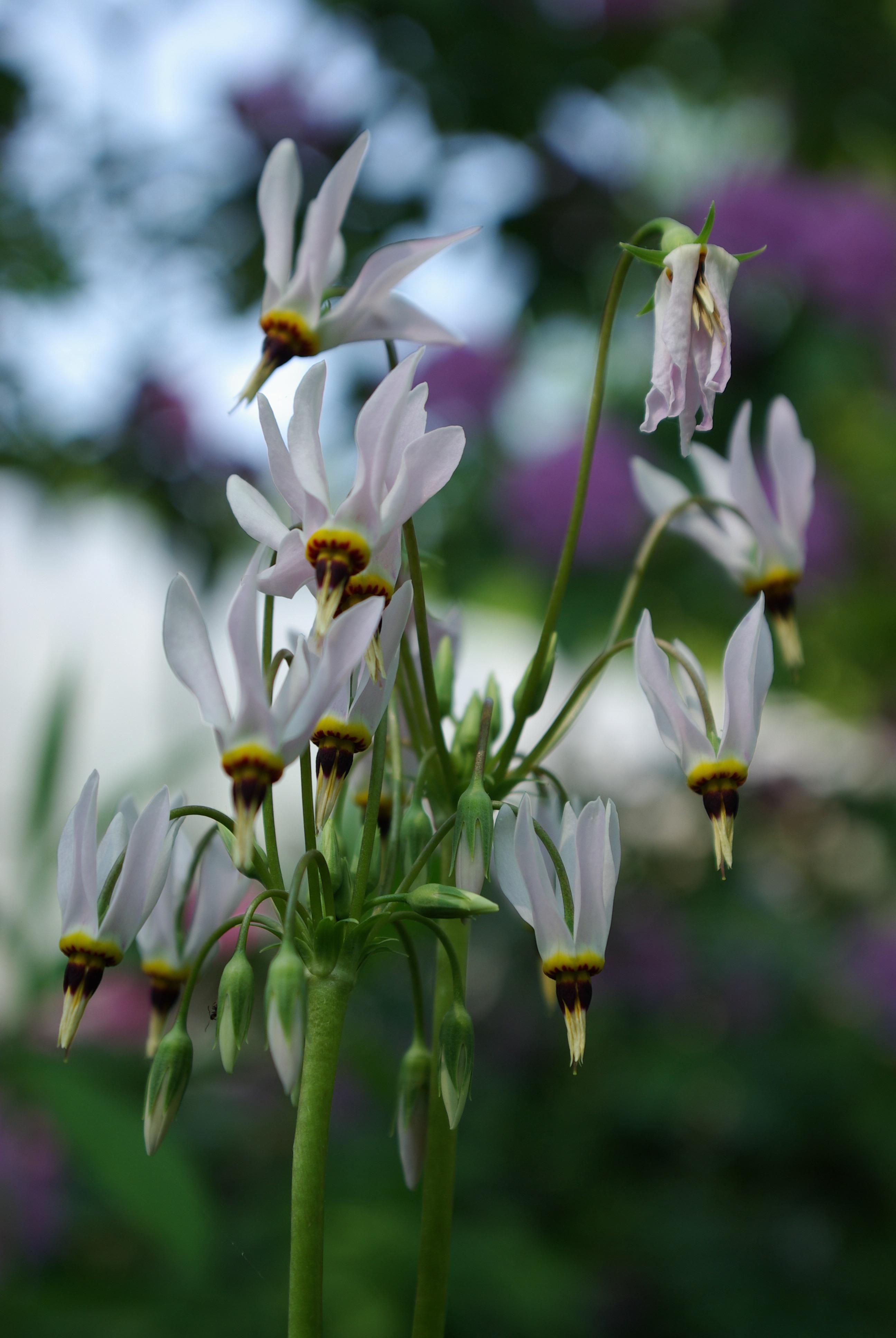 Svendsen & Keller | Plant Sourcing