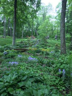 Landscape Gardeners | Specimen Trees