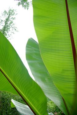 Landscape Design Firm | Plants