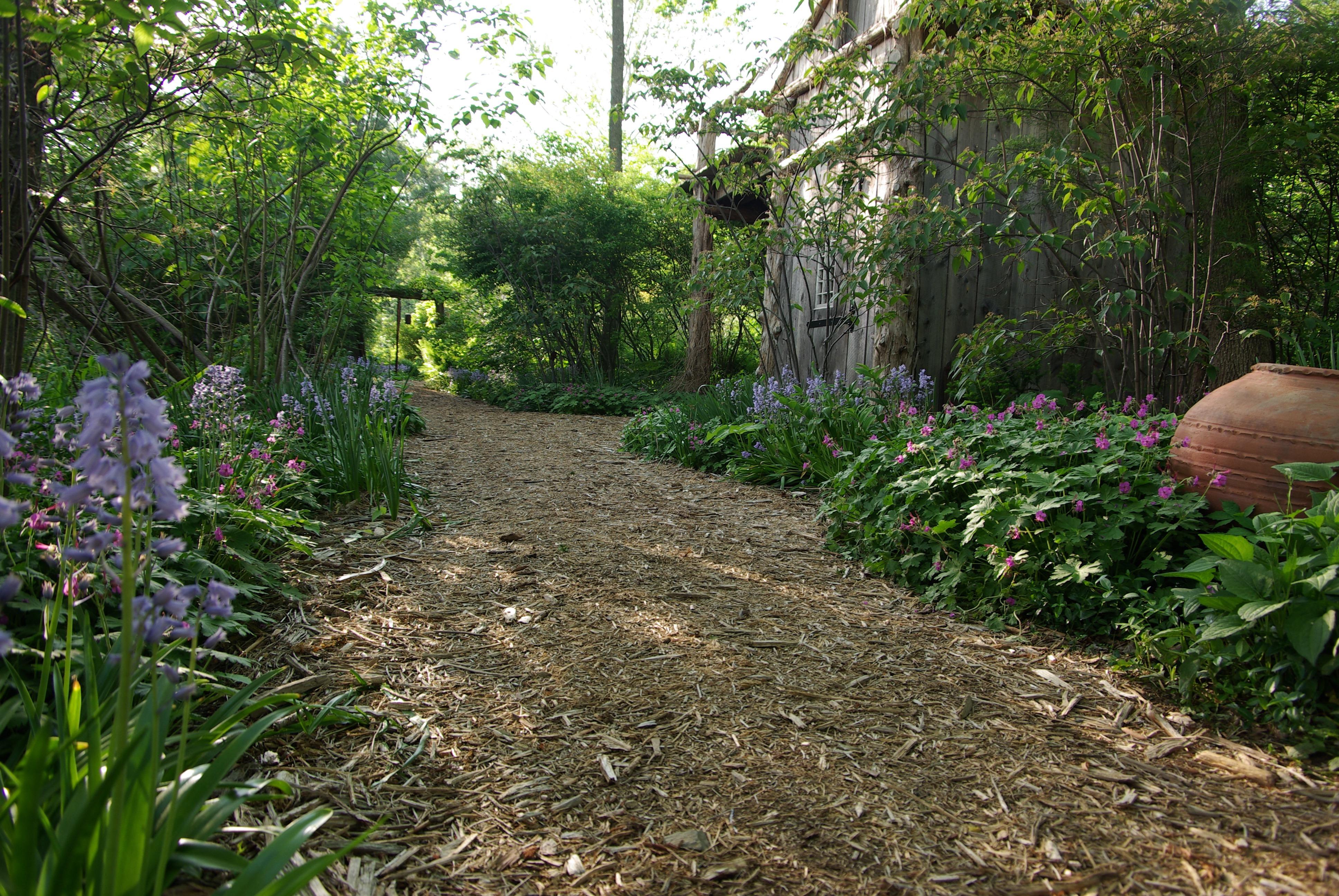 Woody Plants | Landscape Gardeners