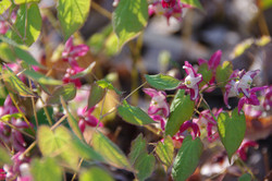 Product Sourcing | Perennial Plants