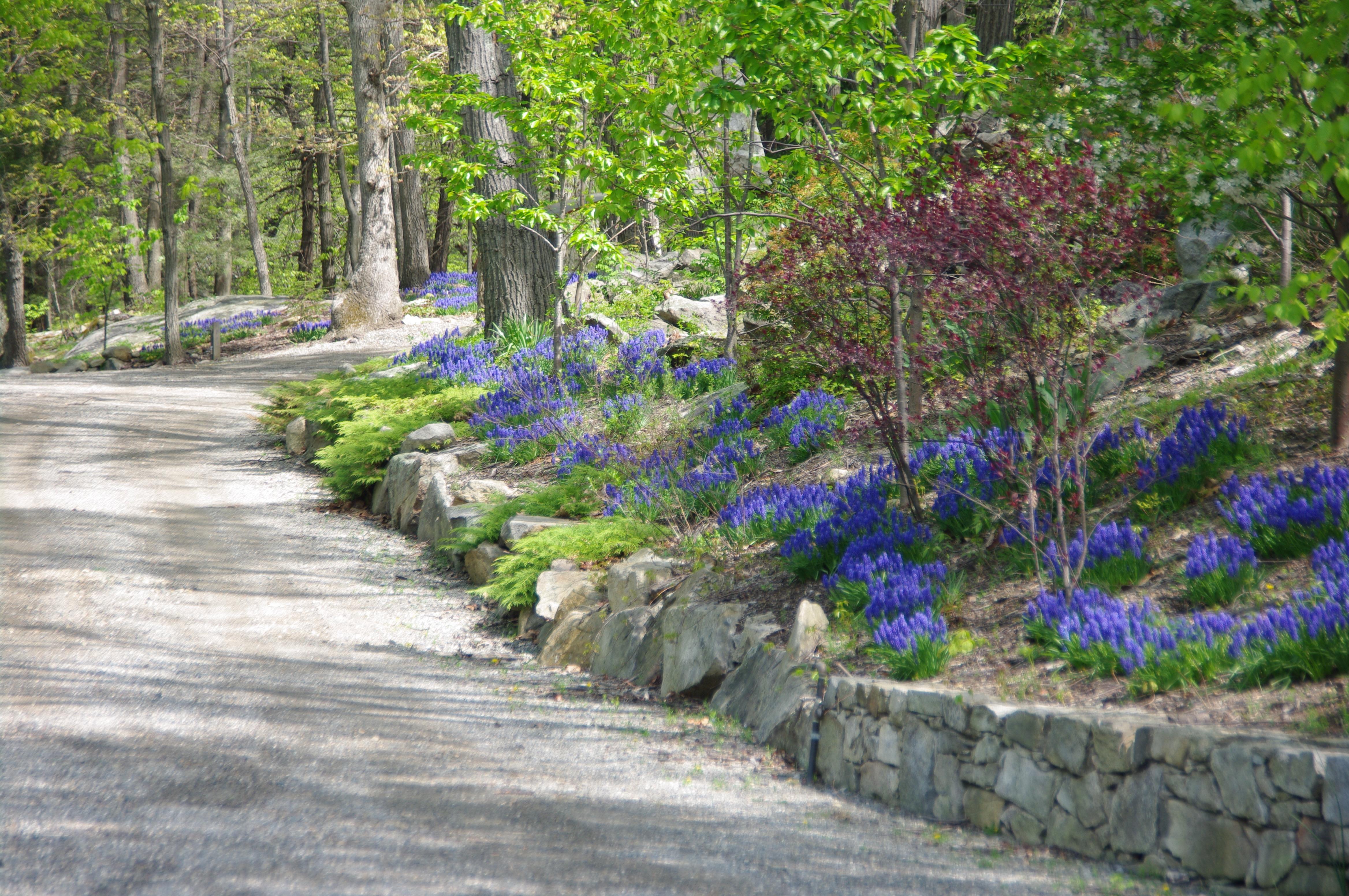 Landscaping | Specimen Trees | NY