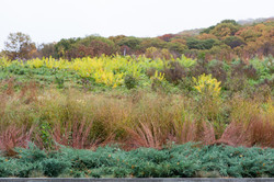 Woody Plants | Natural Landscaping