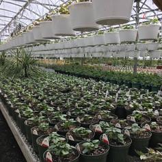 Svendsen & Keller | Ridgefield, CT | Perennial Plants | Landscaper | Garden Design