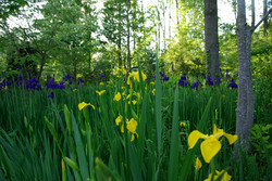 Garden Design & Build | Plant Source