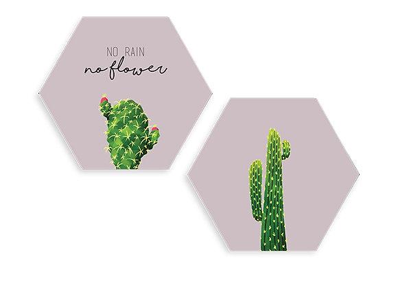 Cuadros Hexágonos No rain no flower