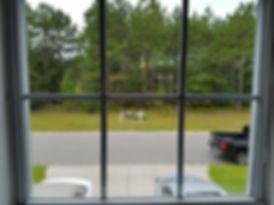 foggy window repair in loveland