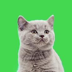 Little Cat.png