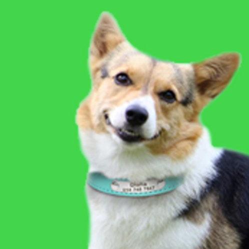 Custom Printed Fabric Dog Collar