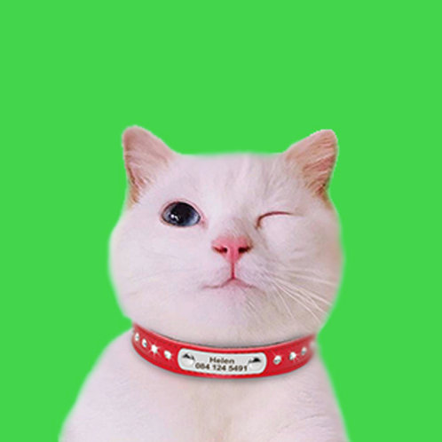 Custom Printed Fabric Cat Collar