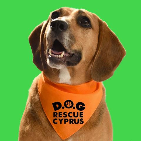 Dog Bandana Cyprus.jpg