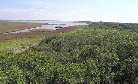 1200px-Aransas_national_wildlife_refuge1