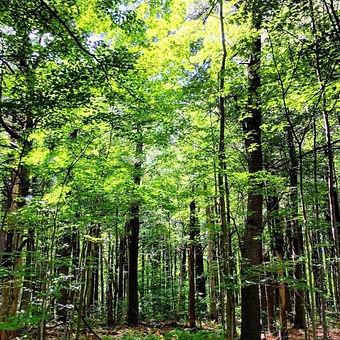cath pines.jpg
