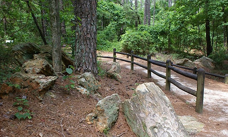 pet forest.jpg