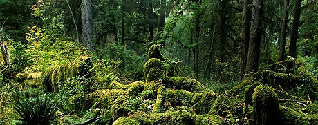 KIC3213-Rain-Forest-Landscape-Hoh-Rain-F