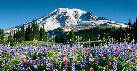 Rainier-Wildflowers-Courtesy-Don-Gyer-72
