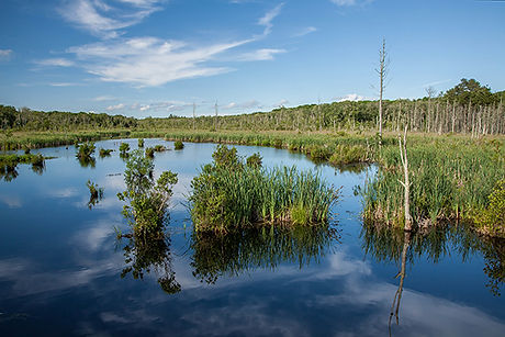 43-Great-Swamp-Wildlife-Management-Area-