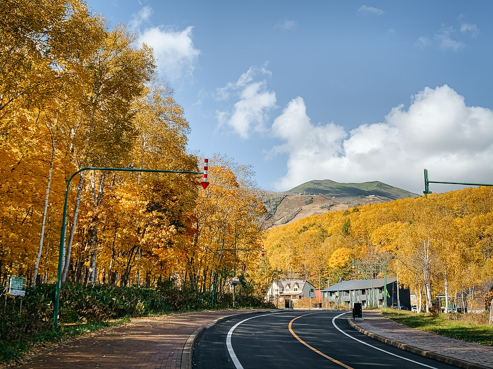 Route 343 surrounded by bright yellow autumn trees and Mt Niseko Annupuri in the distance.