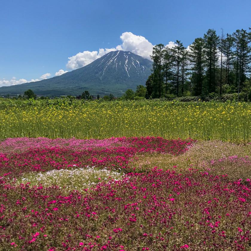 Flower Moss Garden Kutchan Niseko