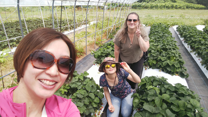 Strawberry picking in Niseko