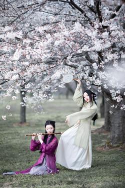 2017-03-25 - Day Cherry Blossom - 00023