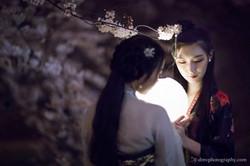 2017-03-27 Night Cherry Blossom - 00105