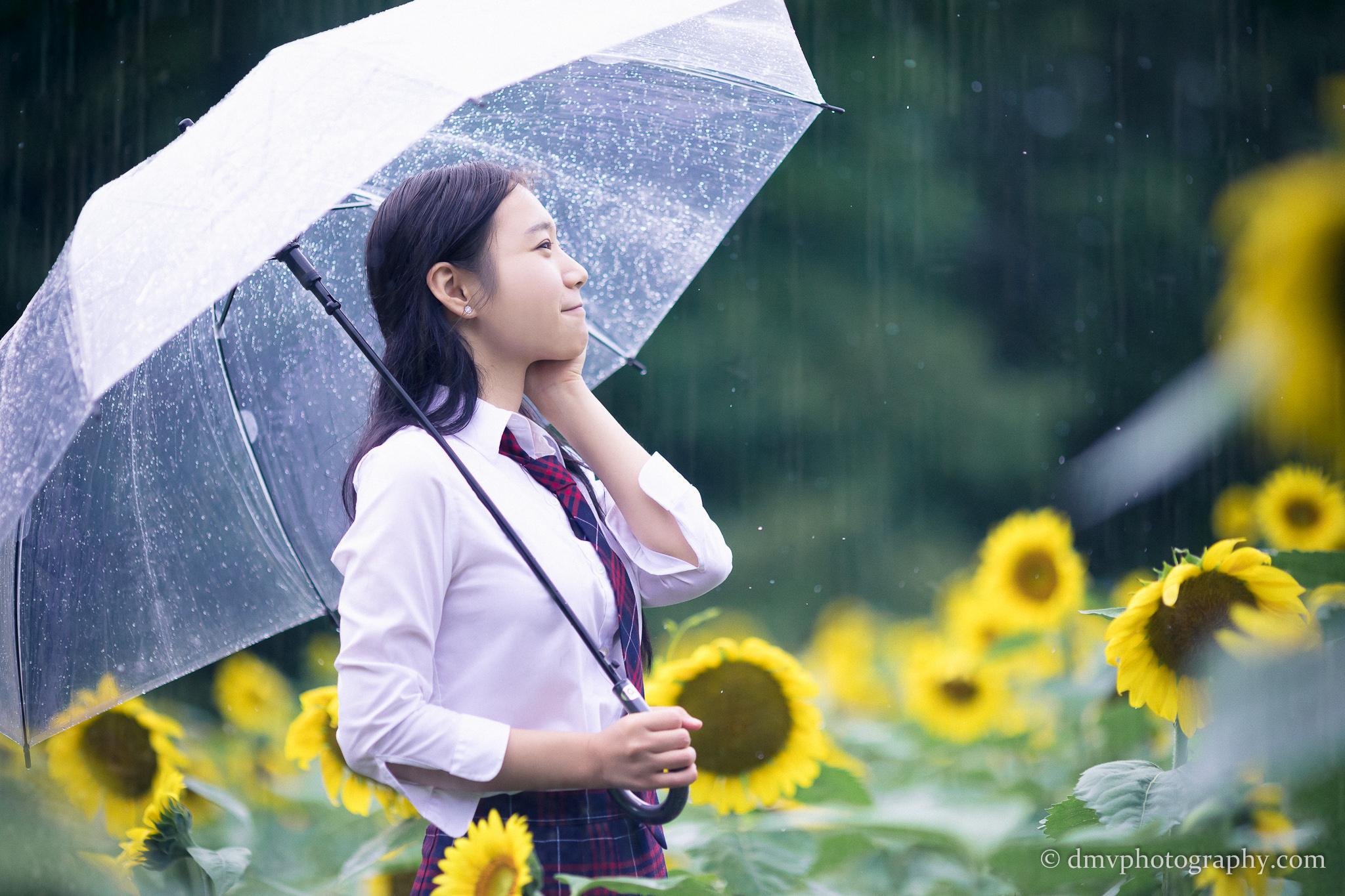 2017-07-29 - Yu Jie Sunflower - 00007