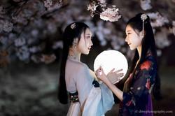 2017-03-27 Night Cherry Blossom - 00132