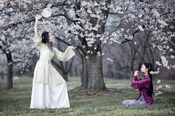 2017-03-25 - Day Cherry Blossom - 00052