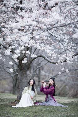 2017-03-25 - Day Cherry Blossom - 00199