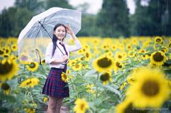 2017-07-29 - Yu Jie Sunflower - 00015