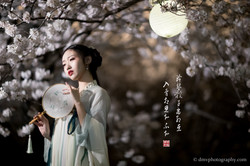2017-03-27 Night Cherry Blossom - 00175v2