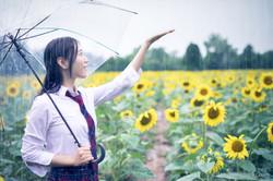 2017-07-29 - Yu Jie Sunflower - 00002