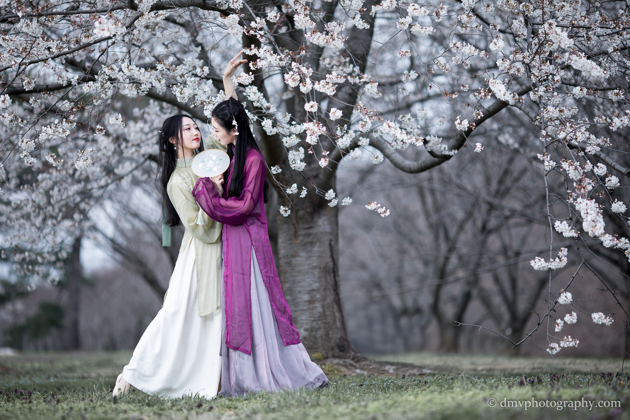 2017-03-25 - Day Cherry Blossom - 00070