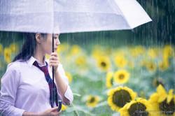 2017-07-29 - Yu Jie Sunflower - 00005