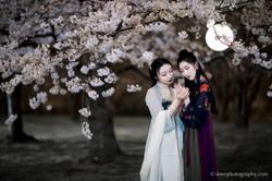 2017-03-27 Night Cherry Blossom - 00141