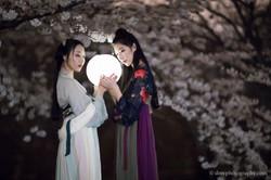 2017-03-27 Night Cherry Blossom - 00110