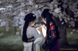 2017-03-27 Night Cherry Blossom - 00113
