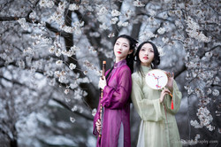 2017-03-25 - Day Cherry Blossom - 00118